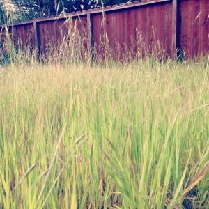 backyard natural growth